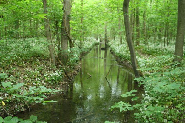 Die Paußnitz im südlichen Auwald. Foto: Ralf Julke