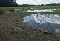Austrocknender Teich im Rosental. Foto: Michael Freitag
