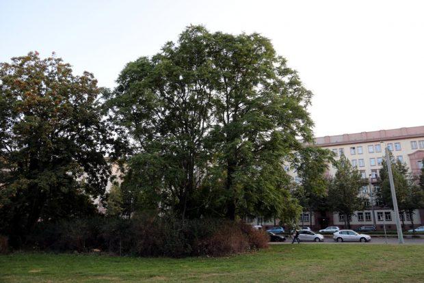 Ein Baumbestand und Tiere am Leuschnerplatz - für den NABU nicht im Bauplan beachtet. Foto: L-IZ.de