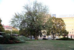 Vor allem entlang der Straßen bilden Bäume am Leuschnerplatz Schatten. Foto: L-IZ.de