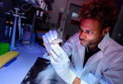 Diyendo Massilani durchsuchte die Genome der Salkhit- und Tianyuan-Individuen auf DNA-Spuren von ausgestorbenen Homininen und wurde fündig. Foto: MPI für evolutionäre Anthropologie