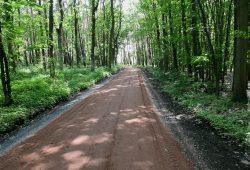 Illegal gebaute Straße durch die Röderaue. Foto: Renate Wilhelms / NABU Sachsen