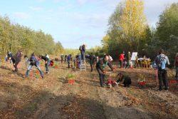 """Pflanzaktion von """"LEIPZIG pflanzt"""" auf dem Gelände des ehemaligen Tagebaus Peres. Foto: L-IZ"""