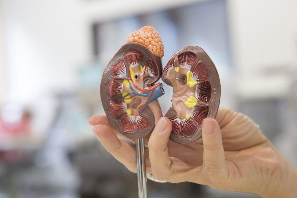 Am 28.11.2020 findet ein Online-Patientenseminar zur Nierentransplantation statt. Foto: Stefan Straube / UKL