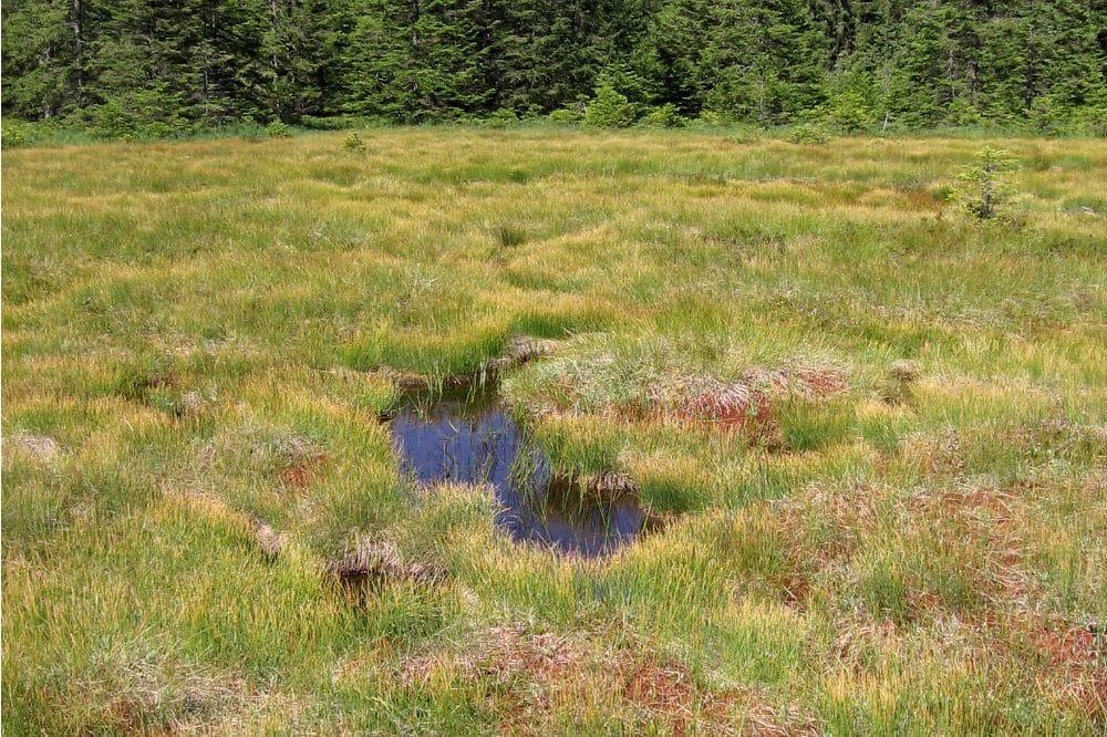 Zu sehen ist das Hirschbäder Moor, ein Moorkomplex aus lebendem Hochmoor mit rotem Torfmoos, stagnierendem Hochmoor und eingestreuten offenen Wasserflächen, den sogenannten Schlenken. Foto: Thomas Sperle