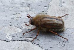 Welche Insekten werden den massiven Pestizideinsatz überleben? Foto: Ralf Julke