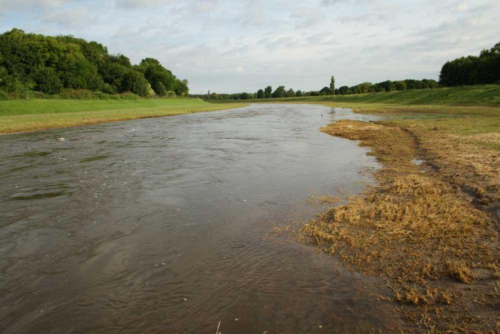 Hochwasser in der Neuen Luppe. Foto: Ralf Julke