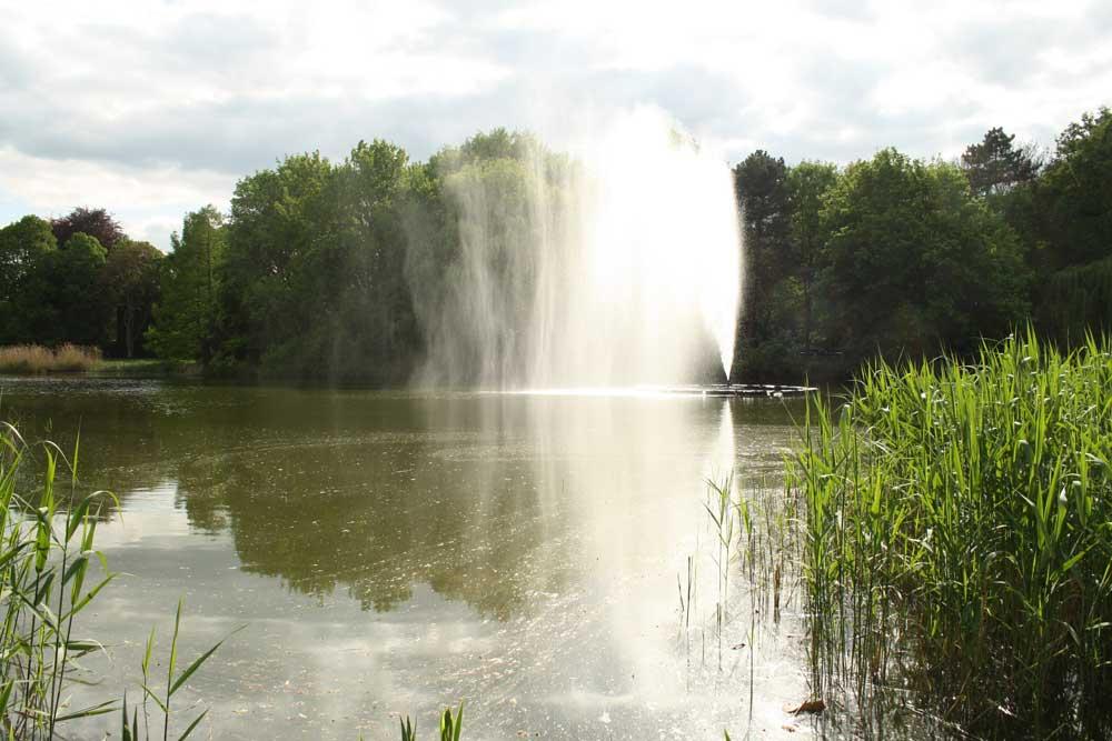 Der Springbrunnen im Palmengartenteich. Foto: Ralf Julke