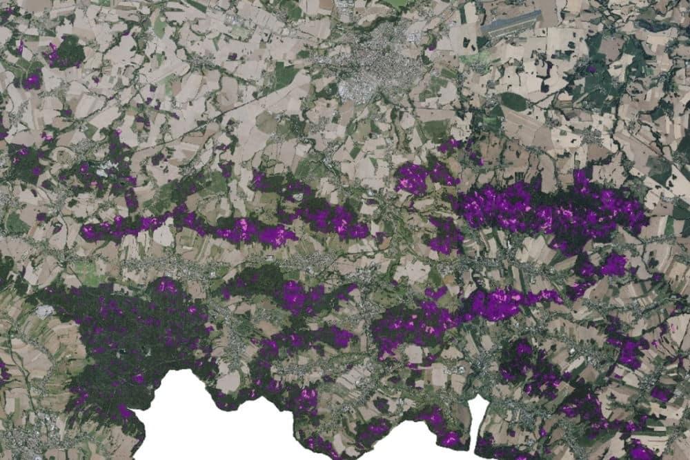 Region Bautzen: Waldschadens- (lila) und Freiflächen (rosa) im Oberlausitzer Bergland (Stadt Bautzen oben im Bild). Foto: Sachsenforst