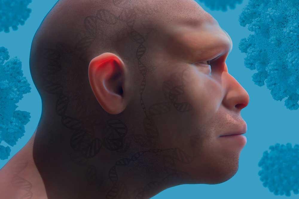 Genvarianten, die wir vom Neandertaler geerbt haben, können unser Risiko, bei einer Infektion mit Sars-CoV-2 schwer zu erkranken, sowohl erhöhen als auch verringern. Grafik: Mattias Karlén