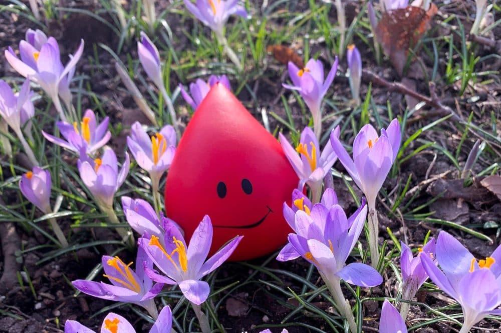 """Unter dem Motto """"Mach' doch mal Frühling!"""" möchte die UKL-Blutbank mit einem attraktiven Gewinnspiel Blutspendewillige vor und nach Ostern verstärkt zum Helfen motivieren. Foto: Isabell Tschirner/UKL"""