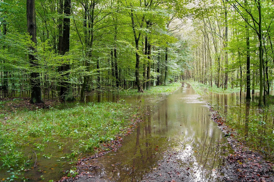 Zum Hochwasser 2010 wurde der Weg im Röderauwald natürlich überschwemmt. Heute würde die neu aufgeschüttete Straße die für den Auwald notwendige Überschwemmung verhindern. Foto: Alf Terpe