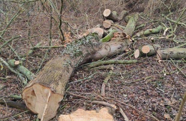 Gefällter Baum im Abtnaundorfer Park. Foto: privat