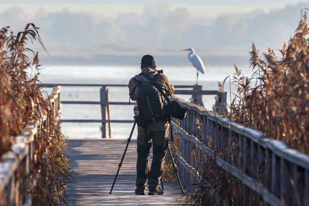 Tierbeobachtungen gehören offensichtlich zu jenen Ökosystemleistungen, die direkt auf das Vorkommen von Arten angewiesen sind. Solche Arten liefern jedoch eine Reihe weiterer Leistungen, etwa Schädlingskontrolle, Samenverbreitung usw. Foto: Pixabay