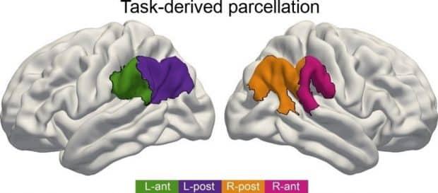 Für Sprachverständnis ist der vordere Teil des IPL in der linken Hirnhälfte von Bedeutung (grün), bei Aufmerksamkeit ist es der vordere Teil auf der rechten Hirnseite (pink). Geht es um soziale Kompetenzen, treten die hinteren IPL-Teile in beiden Hirnhälften gemeinsam in Aktion (orange, violett). Grafik: Max-Planck-Institut für Kognitions- und Neurowissenschaften