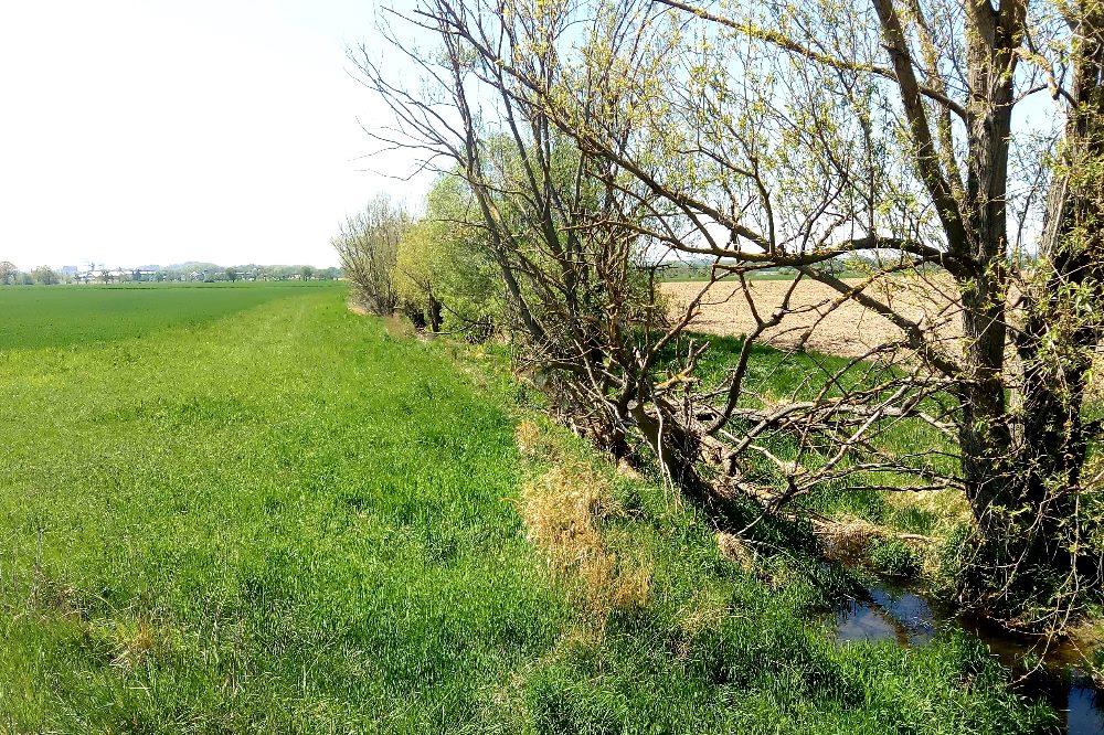 Gesetzlich ist der Gewässerrandstreifen von der Wasserspiegelkante bis zum Beginn der Ackerfläche definiert (hellgrüne Fläche in der Bildmitte). Hierzu können auch zusätzlich auf dem Feld angelegte Randstreifen gehören wie Blühstreifen. Foto: Maria Vlaic