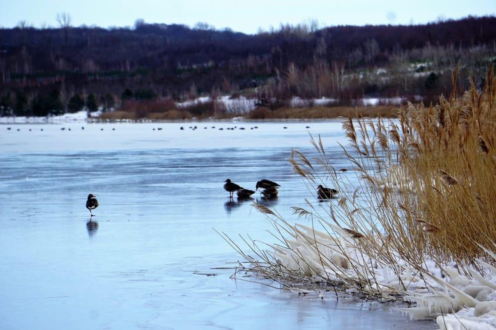 Noch ein Tummelplatz der Wasservögel: die östliche Grunaer Bucht. Foto: Frank Beutner