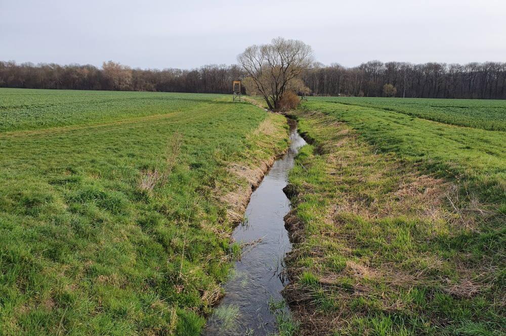 Dieser Gewässerabschnitt des Zschamperts verläuft zukünftig flacher und breiter sowie mit leicht geschwungener Führung. Foto: Kathleen Burkhardt-Medicke