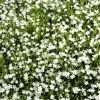 Blumen Natur bei Leipzig. Foto: Michael Freitag