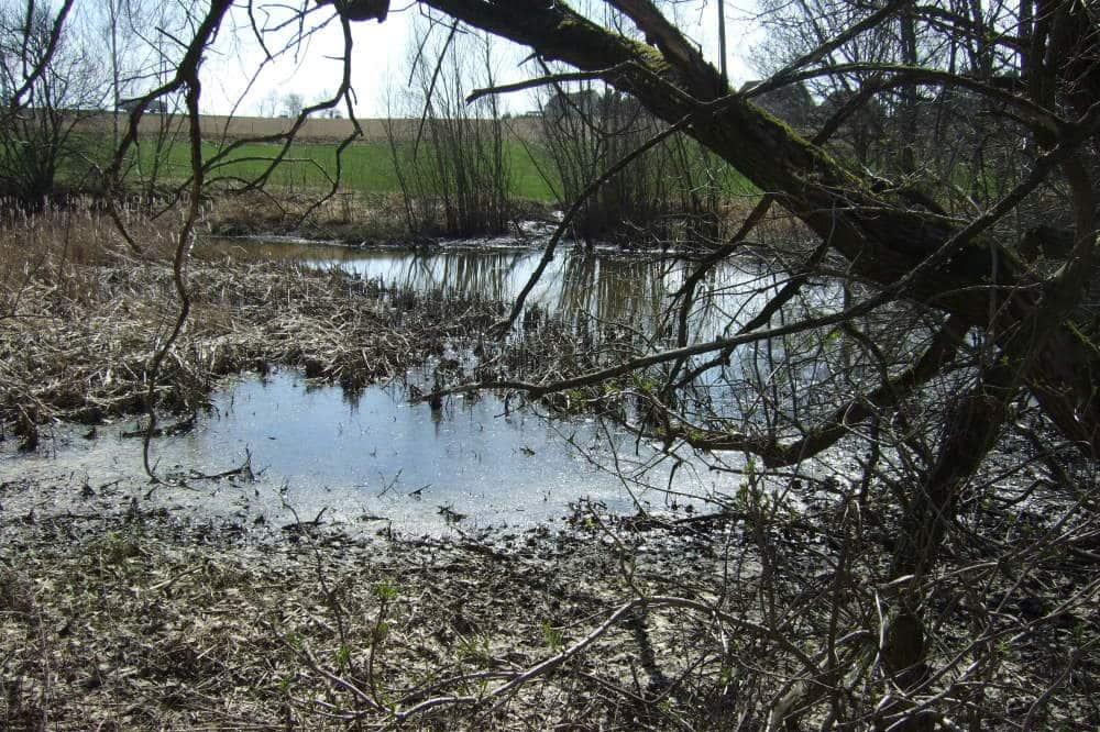 Halsbacher Teiche. Foto: Naturschutzverband Sachsen e.V. (NaSa )
