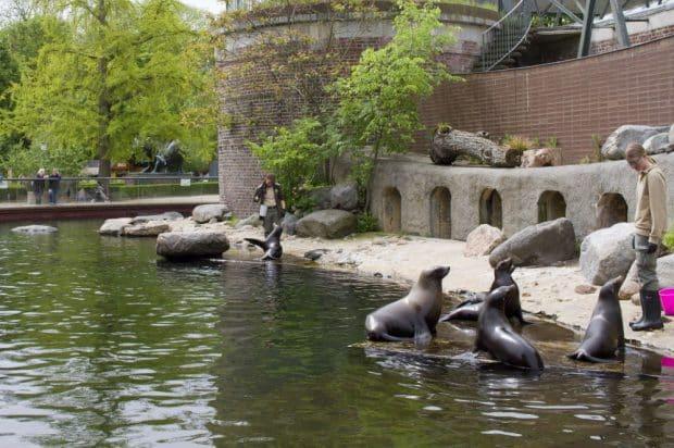Die Seelöwenschule im Zoo Leipzig. Foto: Zoo Leipzig