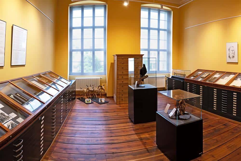 Einblick in die neue Ausstellung im Kupferstichkabinett. Foto: Universitätsmedizin Halle (Saale)