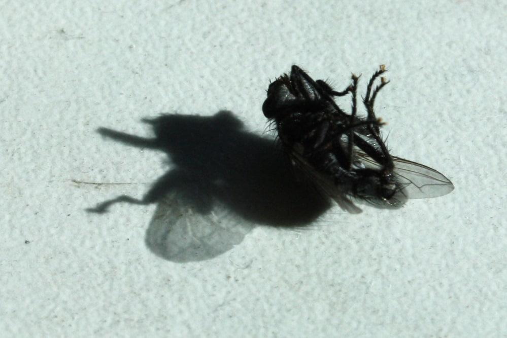 Das Insektensterben geht weiter. Foto: Ralf Julke
