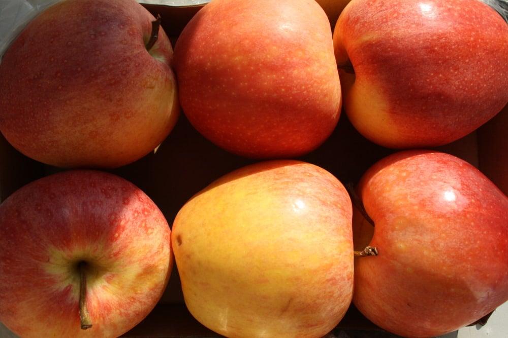 Äpfel aus der Sortiermaschine. Foto: Ralf Julke