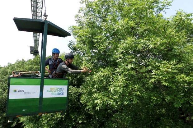 Mit dem Leipziger Auwaldkran erforschen Wissenschaftler den verborgenen Lebensraum Baumkrone. Foto: Steffen Schellhorn