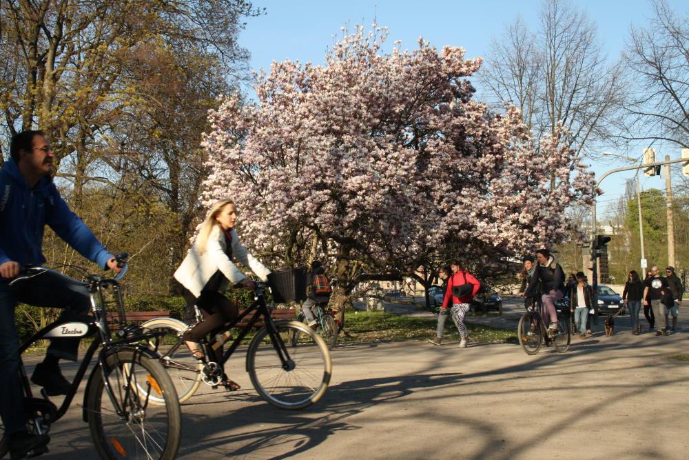 Die Einfahrt in den Klingerhain im Frühjahr. Foto: Ralf Julke