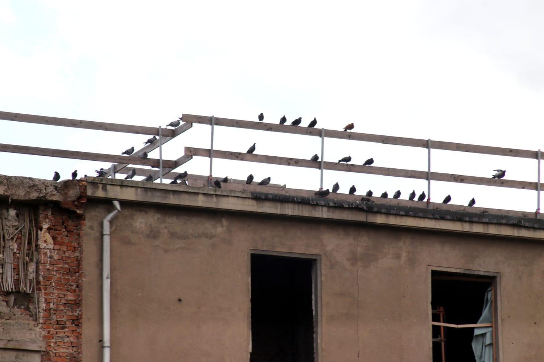Heimat für jede Menge Stadttauben - das Dach des Hotels. Foto: LZ
