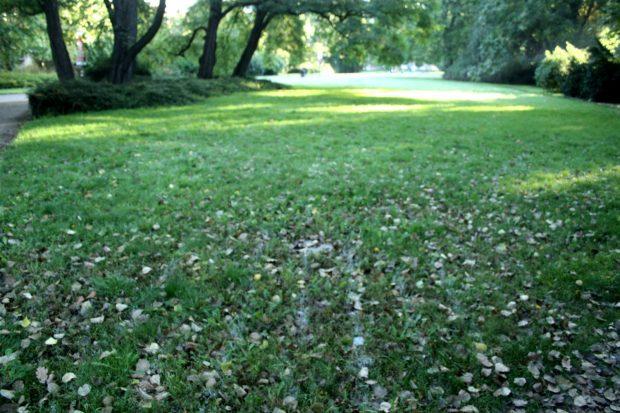 Die letzten Spuren von Bastian Muhrs Kunstprojekt auf dem Rasen im Plastikgarten. Foto: Ralf Julke