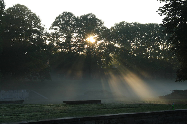 Morgenstimmung im Richard-Wagner-Hain. Foto: Ralf Julke
