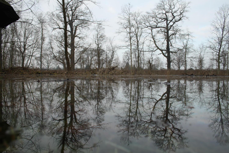 Künstliche Überschwemmung im südlichen Leipziger Auwald. Archivfoto: Ralf Julke